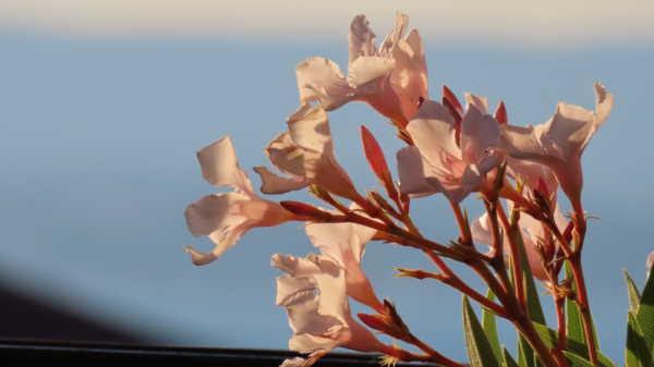 Une touche fleuri en ce temps gris